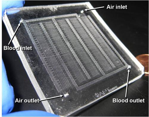 Microfluidic channels created with a stereolithography pattern are the key to a prototype artificial lung.  Source: Joseph Potkay