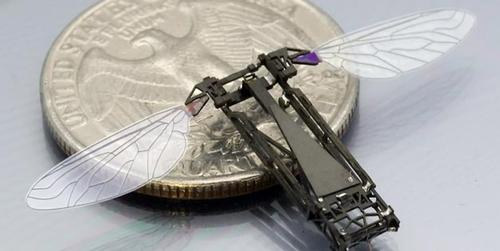 Some winged robots are designed to work in swarms, such as the Monolithic Bee, or MoBee, from Harvard University's Microrobotics Lab. This lab focuses on creating high-performance aerial and ambulatory microrobots and soft robots inspired by biological models. The robots can be used for exploring hazardous environments, search-and-rescue operations, environmental monitoring, and assisting agriculture. The MoBee, which is about the size of a housefly, is made from custom hardware. It is part of the RoboBees Project funded by the National Science Foundation for mimicking the behavior of a bee colony and adapting to changing environments. (Source: Harvard University)
