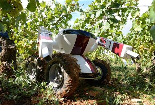 The Wall-Ye robot, the invention of Guy Julien and Christophe Millot, can travel freely around a vineyard and collect and record information about vines, including their location and health, courtesy of artificial intelligence. The robot also can replace humans for the labor-intensive tasks of pruning vines and de-suckering grapes.   (Source: Wall-Ye)