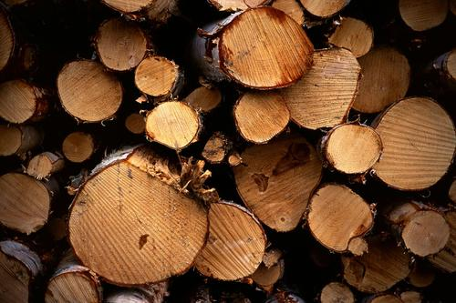 A new thermoplastic composite uses engineered cellulose fiber from trees, such as these logs in Kuopio, Finland, instead of the short glass fibers usually used for reinforcement. Applications include automotive parts and industrial components.   (Source: Wikimedia Commons/Okko Pyykko)