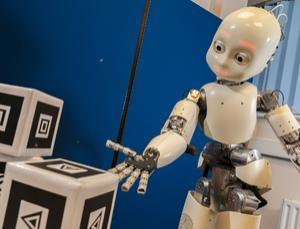 The iCub is the humanoid robot developed at IIT as part of the EU project RobotCub and subsequently adopted by more than 20 laboratories worldwide. It has 53 motors that move the head, arms, hands, waist, and legs, using accelerometers and gyroscopes. It can see and hear; and it has the sense of proprioception (body configuration). The main goal is to study cognition through the implementation of a humanoid robot the size of a three-year-old child.  (Source: icub.org)