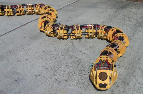 Dr. Gavin Miller designed snake robots like this one using his own funding. He wanted to find out how the highly variable methods snake use to navigate different types of terrain could be applied to robotics. The goal was to develop robots that could take samples, carry sensors, and even make physical changes in different environments, primarily as search-and-rescue aids. Unlike some other robots in this slideshow, Miller's are untethered, so they must carry their own computers and batteries, and they can be easily controlled remotely. SnakeRobots.com shows several generations of Miller's experiments, as well as simulations he developed to refine locomotion strategies. (Source: Gavin Miller/SnakeRobots.com)