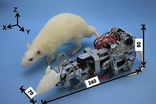 Scientists at Waseda University's Taknishi Lab in Japan created the Waseda Rat-3 robot as part of their research into depression. The robot was used to harass real lab rats to induce depression.(Source: Waseda University)