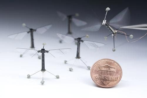 An engineering team working in Harvard University's Microrobotics Lab has completed the maiden flight of its tiny RoboBee flying robot, which weighs 80 mg and has a 3 cm wingspan. Modeled on a fly's body and movements, RoboBees will eventually be untethered and fly in swarms.   (Source: Kevin Ma and Pakpong Chirarattananon/Harvard University)