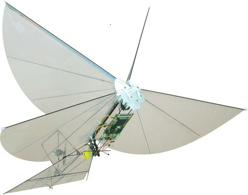 The University of California, Berkeley's Biomimetics Millisystems Laboratory has designed several insect-emulating robots, including  the Bipedal Ornithopter for Locomotion Transitioning (BOLT), which we featured in last year's robot bugs and worms slideshow. This flapping-wing robot, designed for indoor surveillance or search-and-rescue operations, has been improved so much it has a new name: the H2Bird ornithopter. Like the old version, the new version weighs only 13gm (0.45oz), and it carries a 2.8gm (0.09oz) payload. The airframe, tail rotor, and elevator are made from carbon fiber. Previously, the lab demonstrated the autonomous BOLT's ability to fly toward a target unassisted remotely using a closed-loop attitude regulator with onboard sensors and processors. Now, using computer vision, the lab has demonstrated H2Bird's cooperative target-seeking ability with a ground station. The ground station gives the H2Bird real-time heading estimates via a motion-tracking algorithm. Eventually, multiple H2Birds will cooperate in sensing and navigation tasks.(Source: University of California, Berkeley)