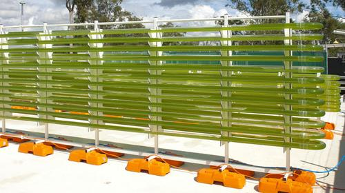 In a pilot plant in Brisbane, Australia, where a consortium including Neste Oils conducts algae-based biofuel research, algae is grown both in tubular photobioreactors, shown here, as well as in open ponds.   (Source: Solar Biofuels Research Centre)