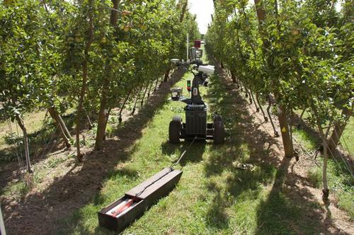 A robot developed by the University of Sydney's Australian Centre for Field Robotics cruises between crops.(Source: University of Sydney)