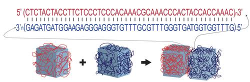 DNA makes glue programmable because one strand of DNA will stick tightly to a matching partner strand, but only if the two strands have complementary chemical 'letters,' or nucleotides (A to T, C to G). Gel bricks coated with matching strands of DNA adhere specifically to each other.