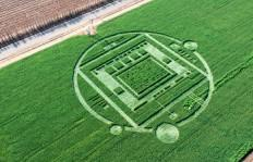 Nvidia's Tegra K1 crop circle.(Source: Nvidia)