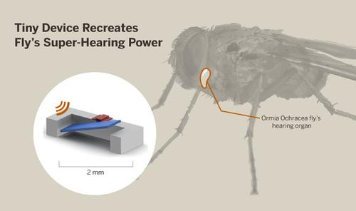 A graphic shows a low-power microphone device that was inspired by the acute sound processing of a certain type of fly. Engineers in the University of Texas Austin's Cockrell School engineers developed the tiny device that could be used to develop battery-free hearing aids that allow a listener to tune in to what he or she is interested in, blocking out ambient noise.   (Source: University of Texas Austin)