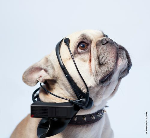 Hear your dog's thoughts with the No More Woof device.  (Source: No More Woof)