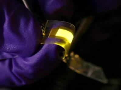 Purple-gloved researcher demonstrates how stretchable OLED display can be bent, stretched, and deformed while working undamaged. (Source: UCLA)
