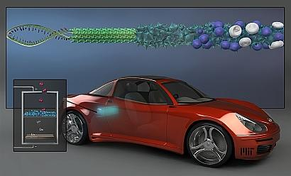MIT researchers have found a way to improve the performance of lithium-air batteries -- which offer promise for eventual use in electric vehicles -- by fabricating the nanowires that form the batteries' cathodes using a genetically modified virus rather than by growing them through conventional chemical means. (See full-size image.)
