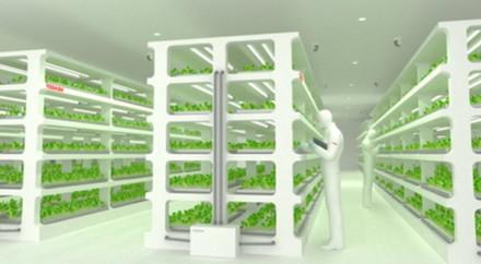 Artist's impression of Toshiba cleanroom vegetable facility. (Source: Toshiba)