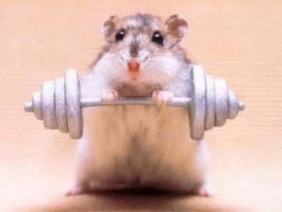 All hail the Mighty Hamster.