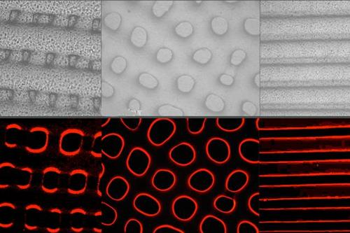 A synthetic elastomer material produced by a MIT researchers changes textures (top) and fluorescent light (bottom) dynamically and simultaneously, similar to camouflage abilities of cephalopods. Images courtesy of the researchers  (Source: MIT News)