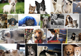 Search results of 'cats that look like dogs'<br />