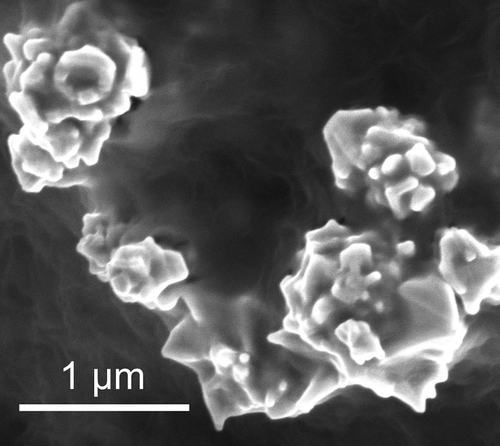 Nanoparticles of graphene-coated nickel. (Source: Stanford/Image: postdoctoral scholar Zheng Chen)