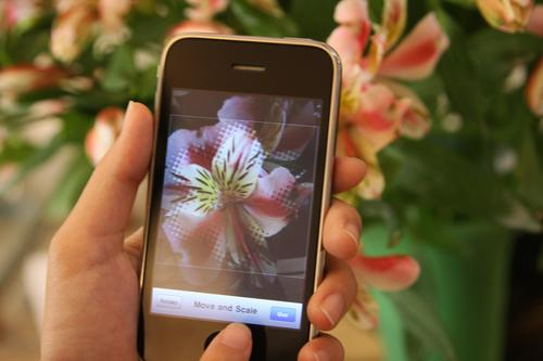 The Flora identification app requires moving and centering the flower to be identified in the first iOS mobile-based flower recognition app in the (Chinese) iTunes store. 