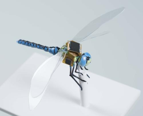 A first generation backpack guidance system that includes energy harvesting, navigation & optical stimulation on a to-scale model of a dragonfly. (Source: Draper)