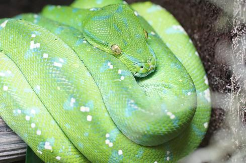 10 Reasons To Snuggle Up To Python