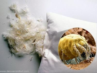 Cleaning Pillows: A Must to Avoid Mites, Mold and Bacteria