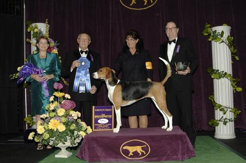 2013 Hound Group winner.  (Source: John Ashbey)