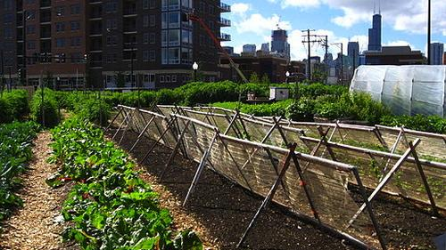 A rooftop farm in Chicago. (By Linda from Chicago, [CC-BY-2.0], via Wikimedia Commons.)