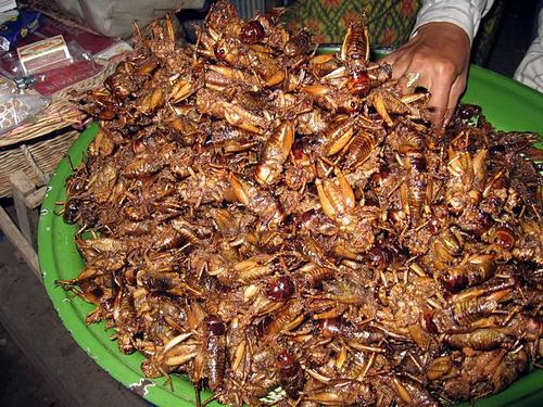 Fried crickets at a Cambodian market. (Source: Thomas Schoch via Wikimedia)