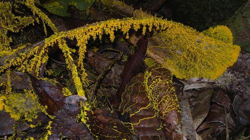 Transport engineers can use slime mold to help plan efficient networks  (Source: Frank.Vassen via Flickr)