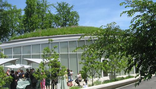 Green roof in Brooklyn.(Source: Ariella Brown)