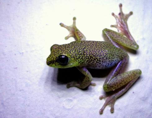 Michigan Fleeced By Nigerian Prince Scam  Nigerian frogs like this one don't generally turn into princes when you kiss them, and Nigerian princes who send you emails asking for money don't generally turn out to be princes at all. But that doesn't stop people from falling for the scheme.  What we think of as 'Nigerian Prince' scams aren't anything new. They go back to at least the 16th century, with the character instead being a Spanish prisoner who's actually innocent (and wealthy).   One of the most embarrassing examples in recent times occurred in 2007. Thomas Katona, the treasurer of Alcona County, Michigan embezzled roughly $1.25 million of the county's $4 million operating budget and paid at least some of it to a scammer. The county had little hope of recovering any of the stolen money.   Katona was sentenced to nine to 14 years in prison for eight counts of embezzlement, one count of attempted embezzlement, and two counts of forgery. As the state Attorney General said, 'The defendant's actions are unthinkable and indefensible.'  Nigerian prince and '419' scams are definitely not a thing of the past. In 2013, according to recent research, such scams cost victims $12.7 billion worldwide; $82 million in the US alone. As the researchers explain, some of the worst victims of advance fee fraud scams experience something like an addiction, and some experience something akin to the Stockholm syndrome that kidnap victims suffer, defending their scammers, even though they only know them through e-mail communications.   (Image: 'natal ghost frog,' by dotun55, via Flickr.)