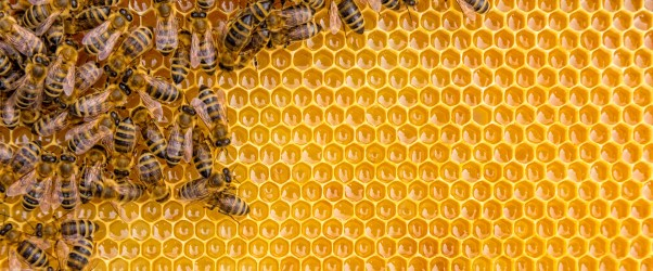 How to Comprehend the Buzz About Honeypots
