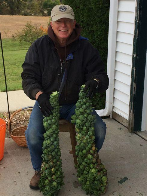 Ed Meachen with a bumper crop of brussel sprouts.