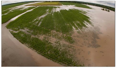 Cropland under water. (Image: US Department of Agriculture's Risk Management Agency)
