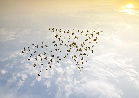 Image: Love the wind - stock.adobe.com