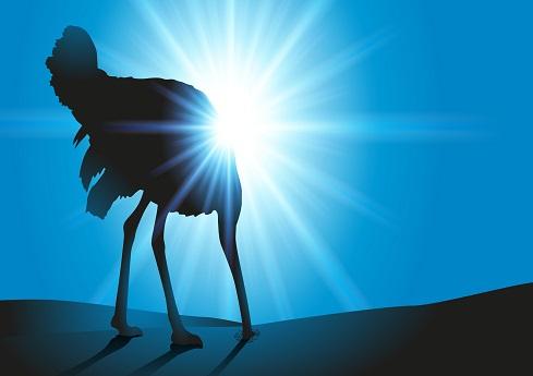 تصویر: اوج سوار - stock.adobe.com