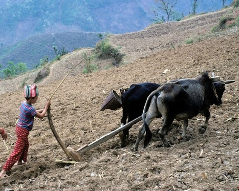 A young Michael Shepherd plowing the fields in NepalImage: Michael Shepherd