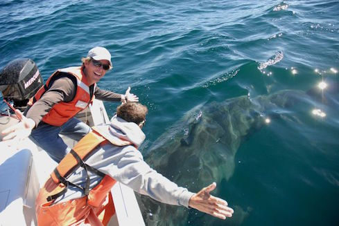 Salvador Jorgensen successfully tags a white shark
